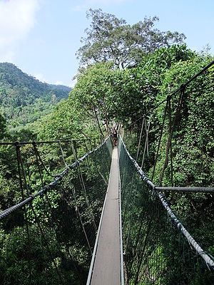 English: Canopy Walkway in the Taman Negara Na...