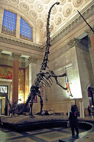 File:Barosaurus mount 1.jpg
