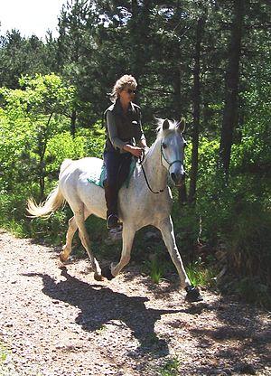 English: An Italian rider trotting on a barefo...