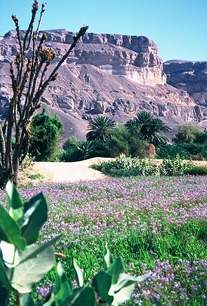 en: Region close to Sayun in the Hadhramaut Va...