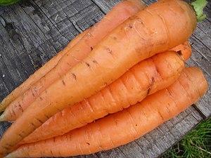 Морковь - Carrot