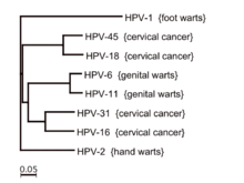 How common is anal cancer