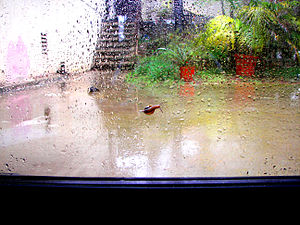 English: A snail on a rainy window