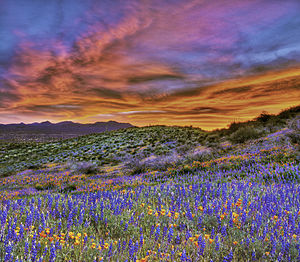 San Carlos IR wildflowers, 2010, Sunset