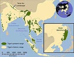 Sejarah penyebaran harimau (kuning pucat) dan pada tahun 2006 (hijau).[2]