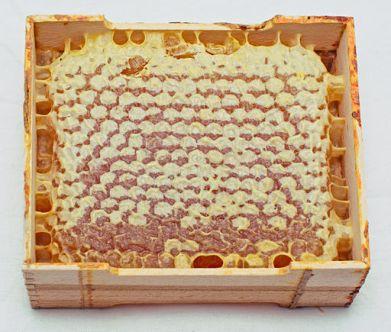 Сотовый мёд