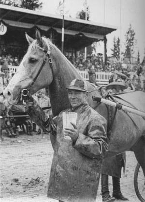 English: Finnhorse gelding Reipas during the L...