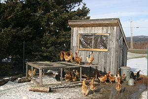 A chicken coop.