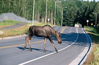 An Agile Driver should be able to avoid accidents by adapting to obstacles on the road.