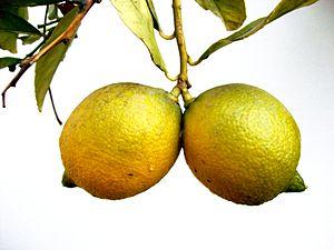 English: Lemons Español: Linomes
