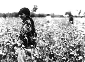 Joven china cosechando frutos de adormidera en Manchukuo