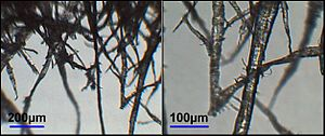 Fibres in wood pulp