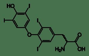 thyroxine (T 4 )