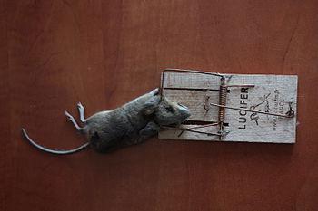 Pułapka na myszy z myszą:) Mausefalle mit der ...