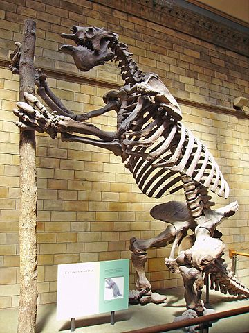 Megatherium at London NHM. Image by Ballista