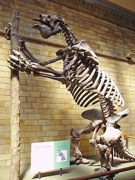 Giant sloth of ancient times