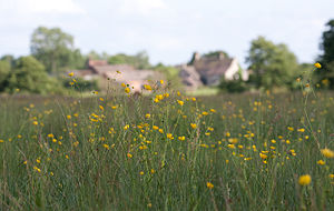 Meadows at Allimore Green.