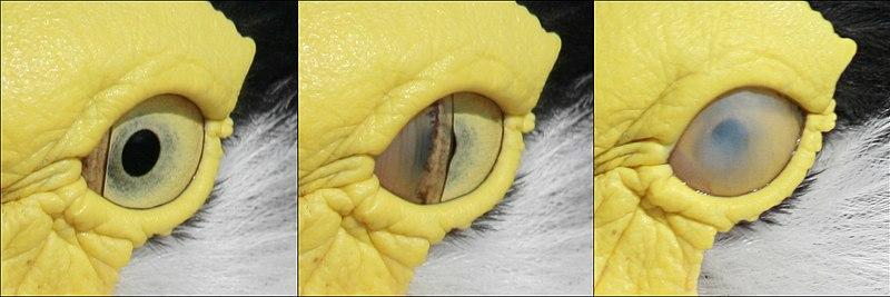 File:Bird blink-edit.jpg