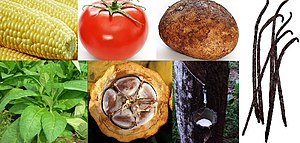 Montage of New World Domesticated plants. Cloc...