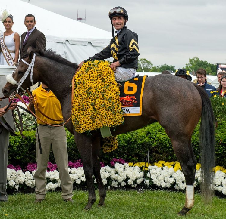Image Result For Preakness Wikipedia