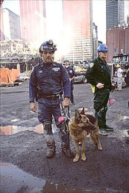 world trade center search and rescue dogs