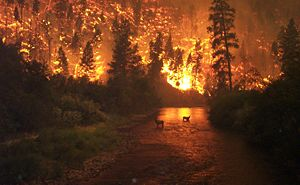 "English: ""Elk Bath"" – A wildfire on ..."