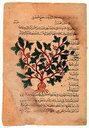 "Arabic translation of Dioscorides' ""De Ma..."