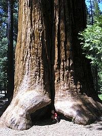 Gigante sequoia-nazionale-monumento-jason-hickey.jpg