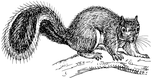 Squirrel (PSF)