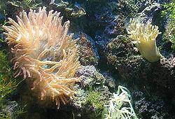 Anemone.bristol.750pix.jpg