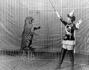Vallecita's leopards: Female animal trainer an...