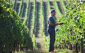 Winemaker Tony Rynders, former winemaker of Do...