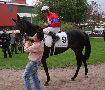 English: Thoroughbred race horse Touch of Hawk...