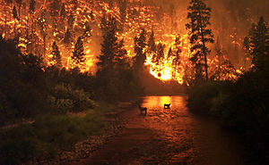 "English: ""Elk Bath"" – A wildfire in ..."