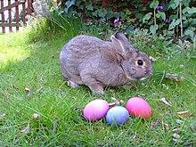 Kelinci dan telur