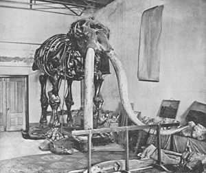 The Warren Mastodon.