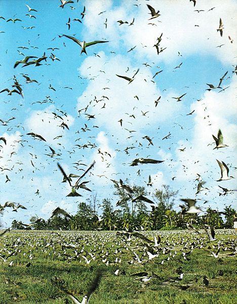 birdisland