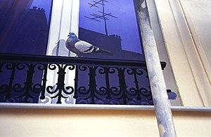 English: A trompe-l'œil of a pigeon on a windo...