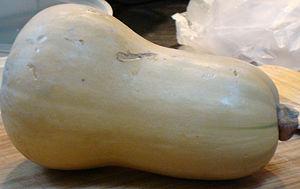 English: A butternut pumpkin Svenska: Butternu...