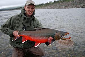 Large male arctic char... :Original caption: :...