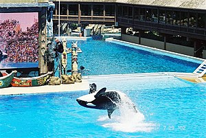 "Orca ""Killer Whale"" in US amusement park"
