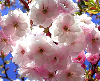 Rochester....flowersMinnesota