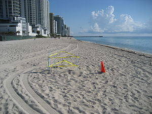 Turtle nest, Sunny Isles (just north of Miami ...