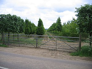 English: Tree nursery, Southill, Beds.