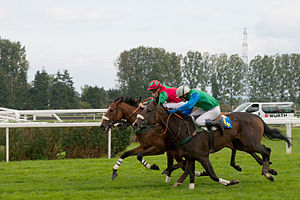 English: Arriving in a horse race in Strasbour...