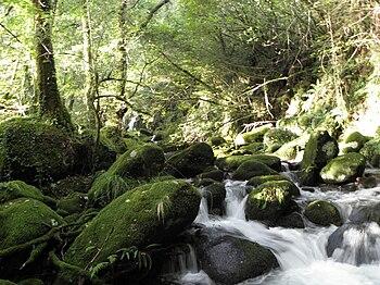 Devesa de Chacín, Mazaricos El Bosque animado ...