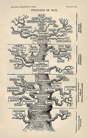 """Ernst Haeckel's """"tree of life"""", Darw..."""