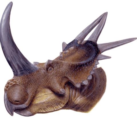 File:Rubeosaurus ovatus.png