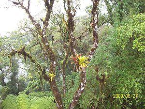 Serra da graciosa Mata atlântica 2 py5aal
