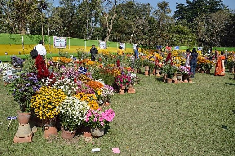 File:Annual Flower Show - Agri-Horticultural Society of India - Alipore - Kolkata 2013-02-10 4734.JPG